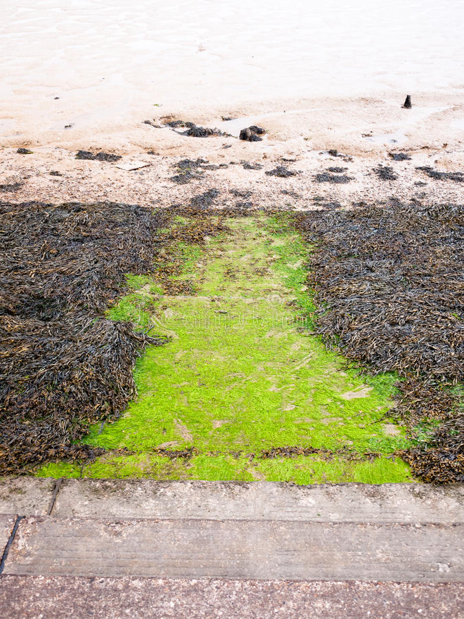Seaweed below steps at seaside front onto mudflats river. England; UK royalty free stock image