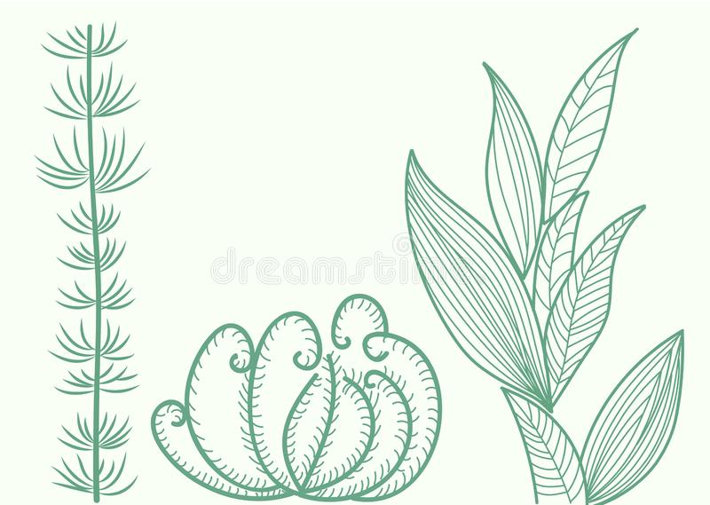 Seaweed at the bottom. Collection of species for design. Eps 10 royalty free illustration