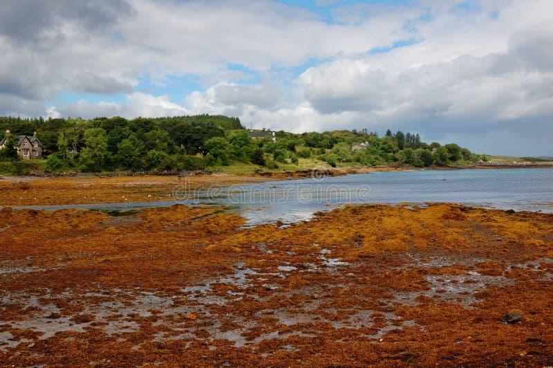 Download Seaweed On The Coast Of Skye. Stock Image - Image: 16305903