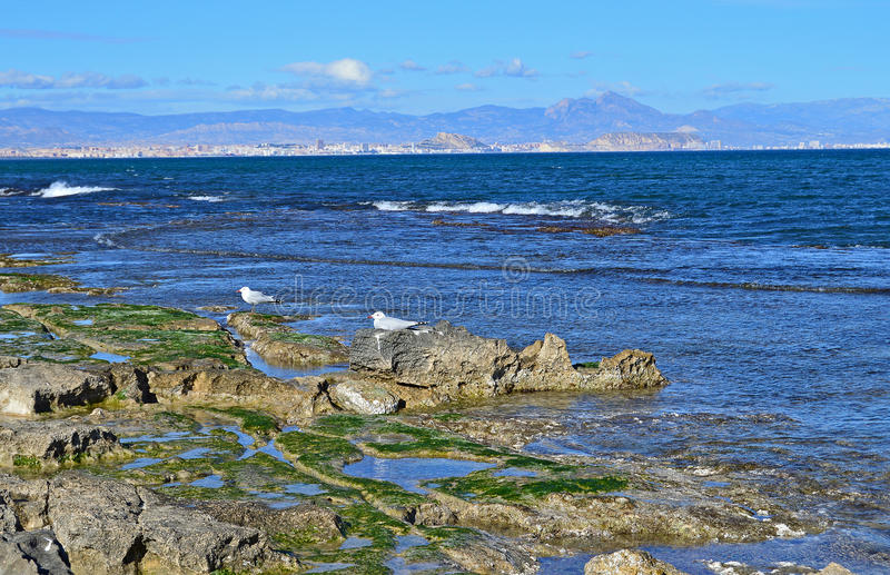 Seaweed Covered Rock See View royalty free stock photography