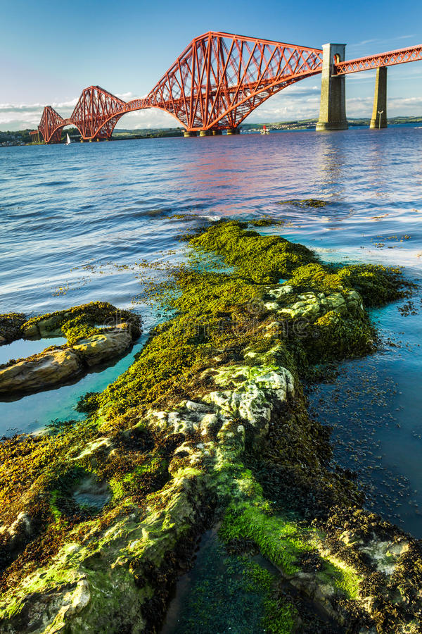 Seaweed and Forth Road Bridge in Scotland