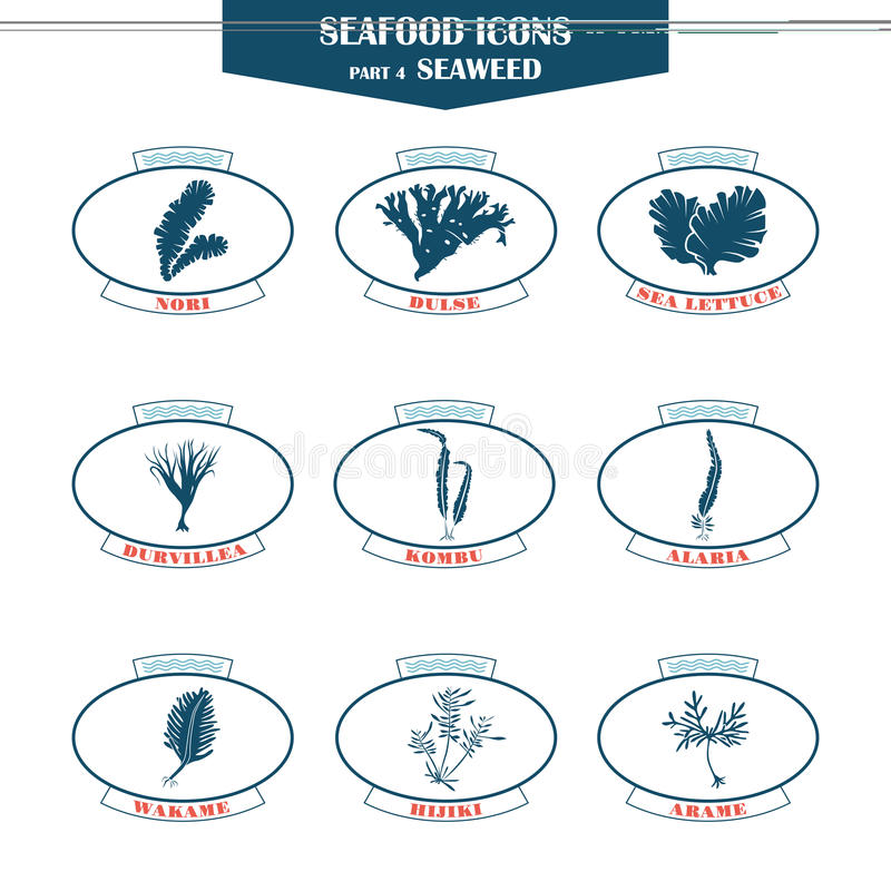 Seaweed icons set. Seafood icons. seaweed icons. Can be used for restaurants, menu design, internet pages design, in the fishing industry, commercial royalty free illustration