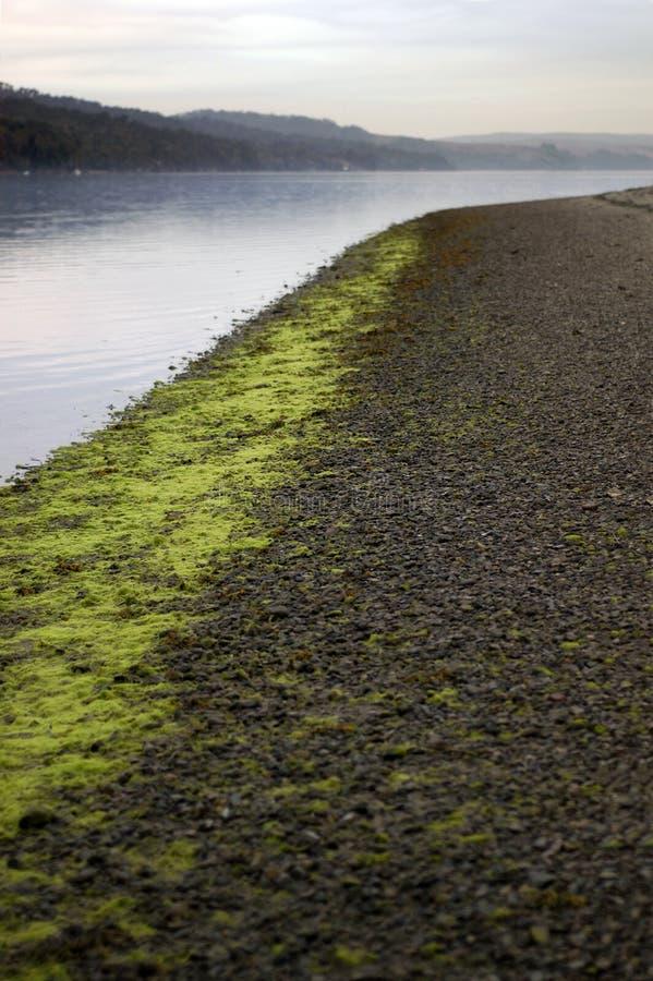Download Seaweed Line Along Pebble Shor Stock Image - Image: 2191599