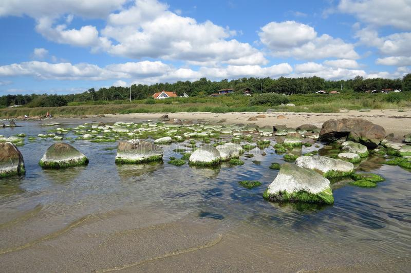 With seaweed overgrown round rocks on Tylösand beach in Sweden, Europe stock photos