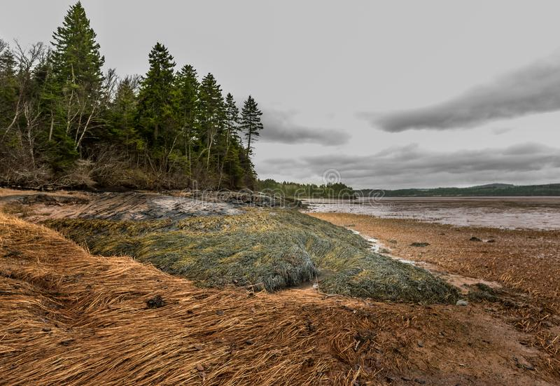 Seaweed Path royalty free stock images