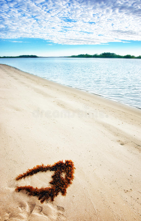 Download Seaweed on perfect beach stock photo. Image of nobody - 25570116