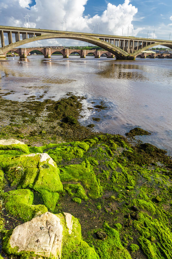 Seaweed on a rock under the bridge stock photography