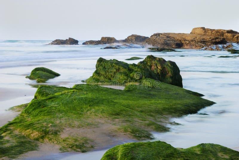 Download Seaweed Rocks stock photo. Image of green, seaweed, rocks - 16325688