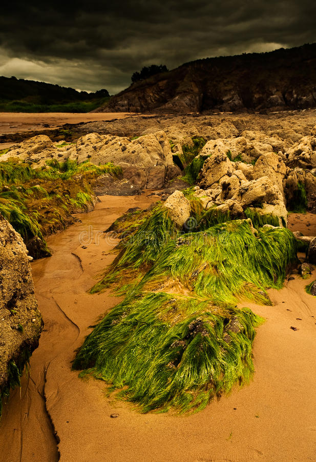 Seaweed scenery. Low tide in Brittany, France stock image