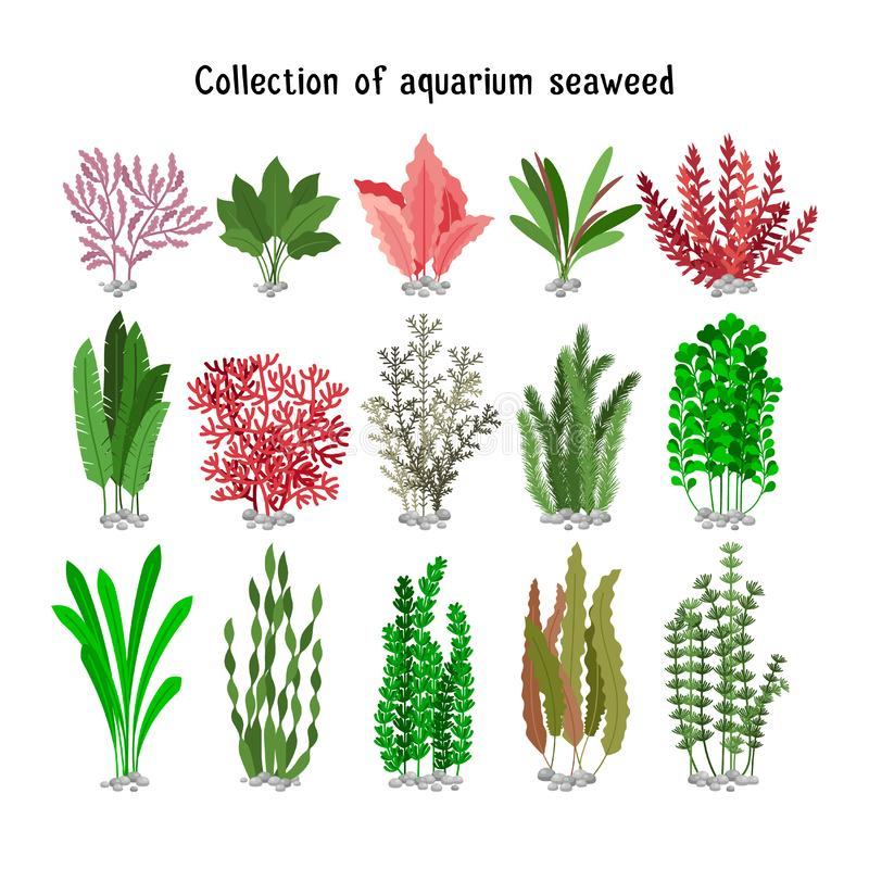 Seaweed set illustration. Yellow and brown, red green aquarium seaweeds biodiversity isolated on white. Seaweed set illustration. Yellow and brown, red and green stock illustration