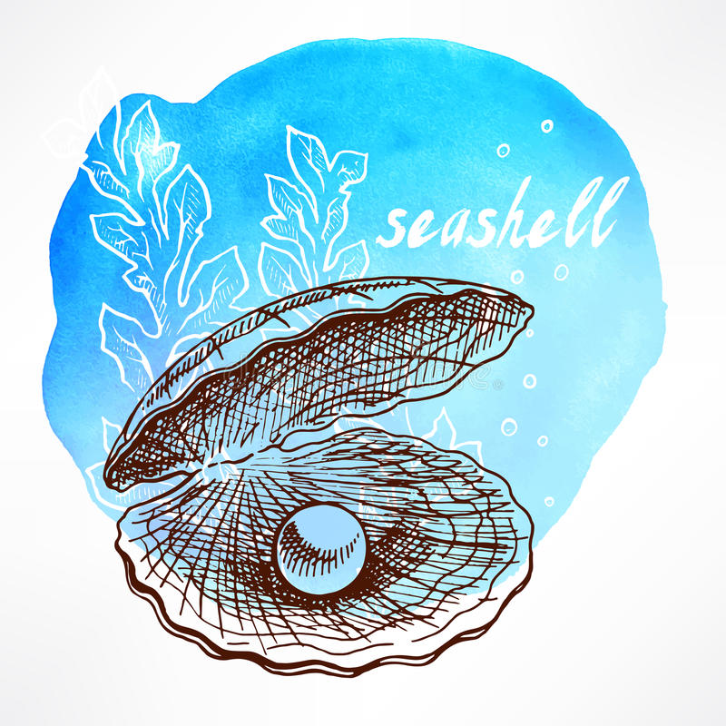 Seaweed and shell with pearl. Beautiful watercolor background with hand-drawn seaweed and shell with pearl royalty free illustration