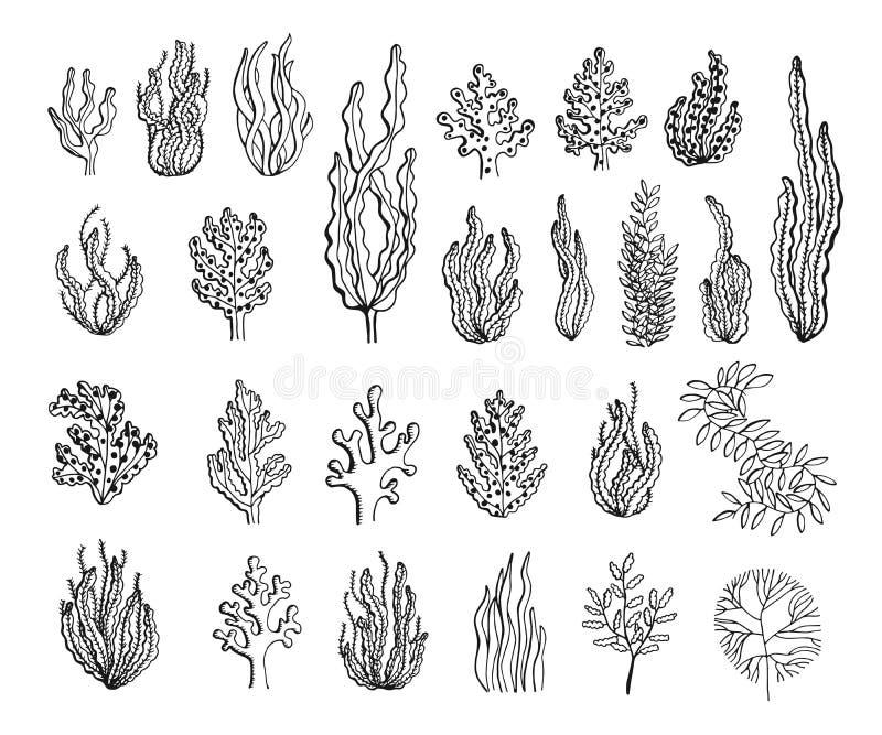 Seaweed sketch set vector. Black silhouette stock illustration