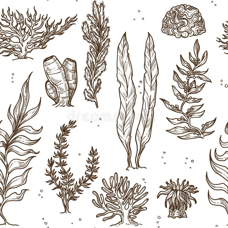 Seaweed underwater plants and corals or sponges. Underwater plants seaweed and corals and sponges monochrome seamless pattern leaves and bushes sea and ocean stock illustration