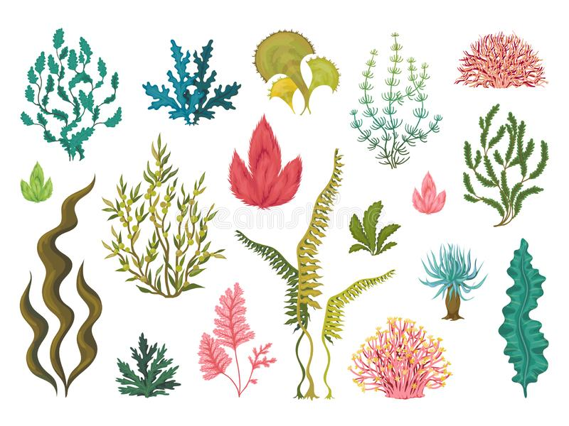 seaweeds Подводные заводы океана, элементы коралла моря, водоросли эффектной демонстрации океана руки вычерченные, чертеж мультфи бесплатная иллюстрация