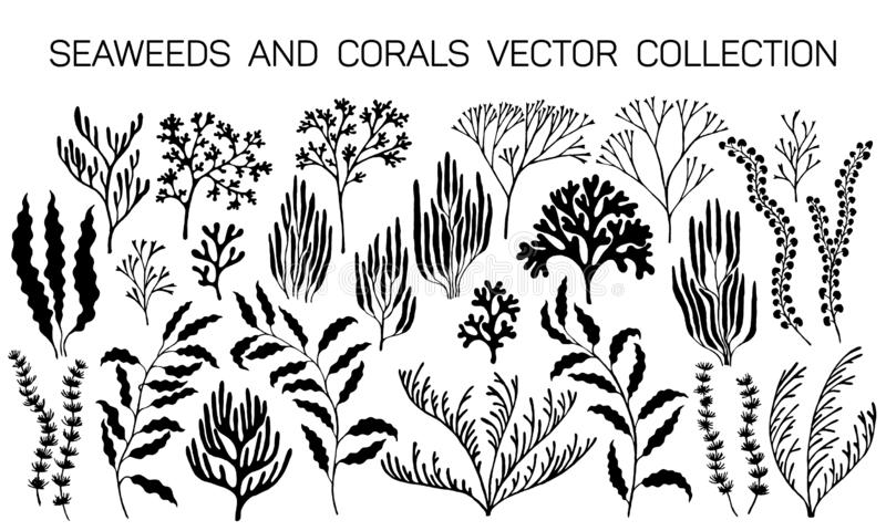 Seaweeds and coral reef underwater plans. Vector collection. Aquarium, ocean and marine algae water plants, corals isolated on white. Black seaweeds and polyps stock illustration