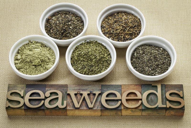 Download Seaweeds - Diet Supplements Stock Photo - Image: 36586796