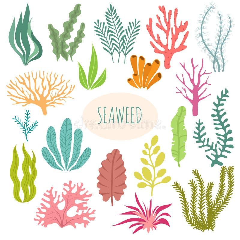 seaweeds Plantas do aquário, plantação subaquática Grupo isolado silhueta da alga do vetor ilustração royalty free