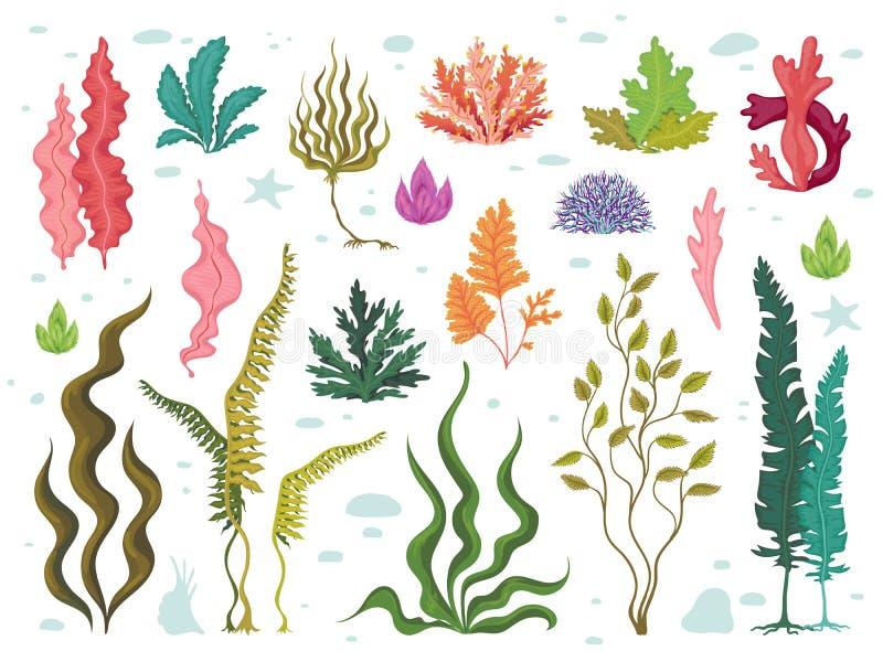 Seaweeds. Sea underwater plants, ocean coral reef and aquatic kelp, hand drawn marine flora set. Vector seaweed cartoon stock illustration