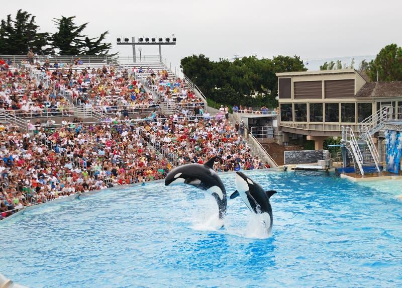 SeaWorld em San Diego fotos de stock royalty free