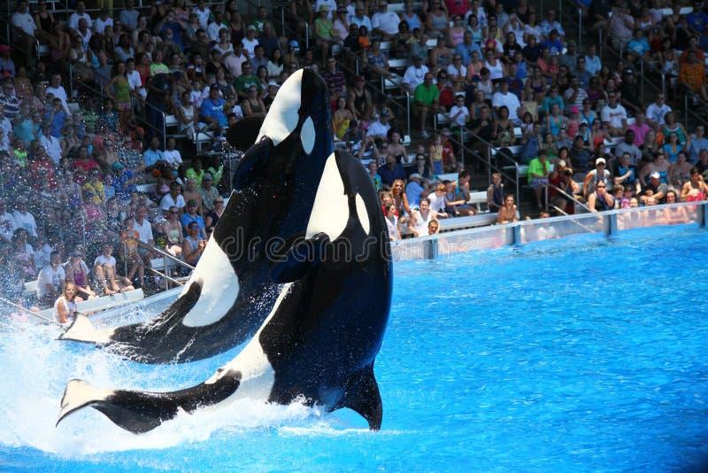 Seaworld Florida terug op Spoor stock fotografie