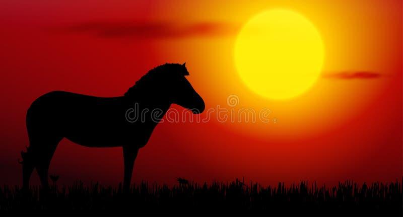 Sebra på solnedgång vektor illustrationer