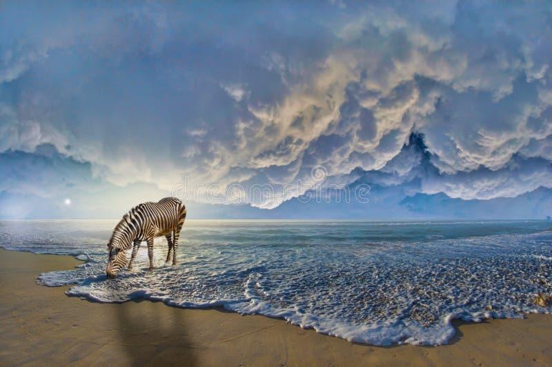 Sebra på stranden vektor illustrationer
