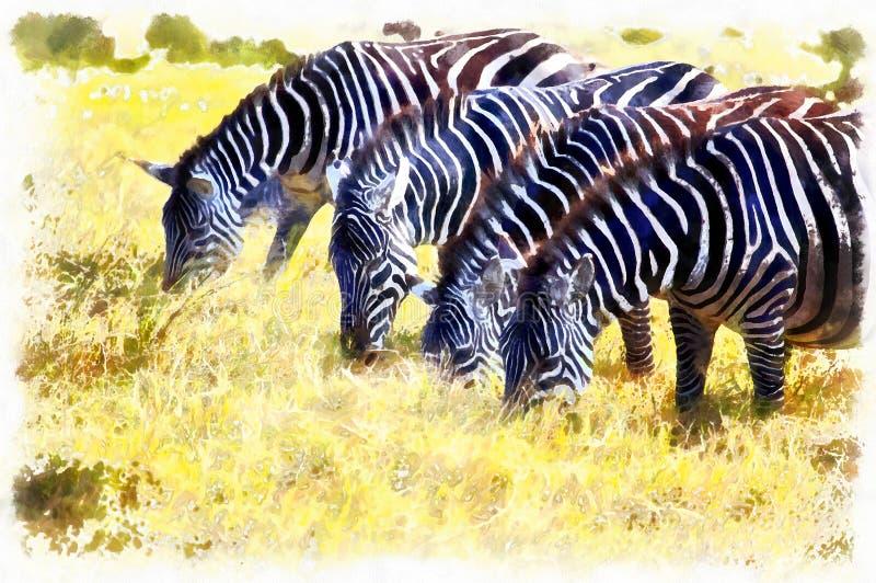 Sebra som matar i djurlivnaturen Tanzania Afrika royaltyfri fotografi