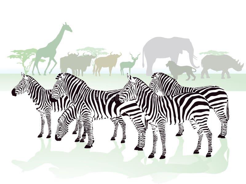 Sebror i savannet royaltyfri illustrationer