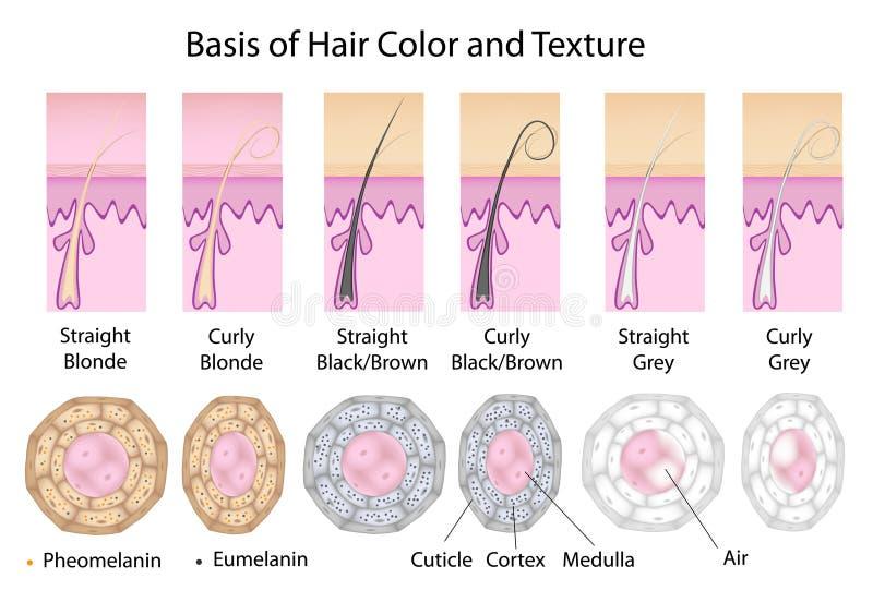 Secção transversal da textura e da cor diferentes do cabelo