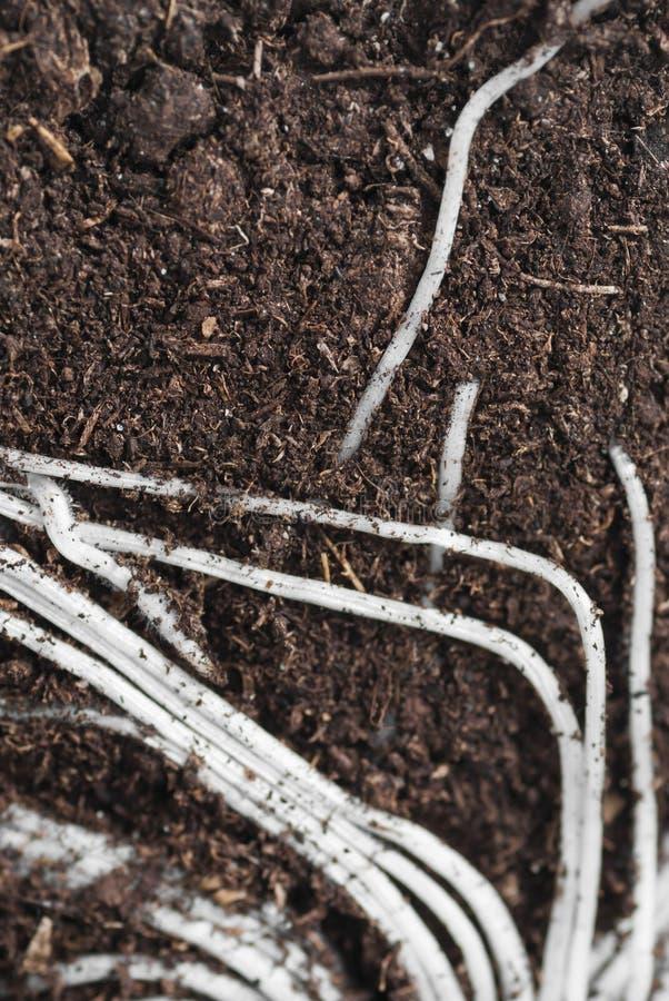 Secção transversal das raizes. imagens de stock