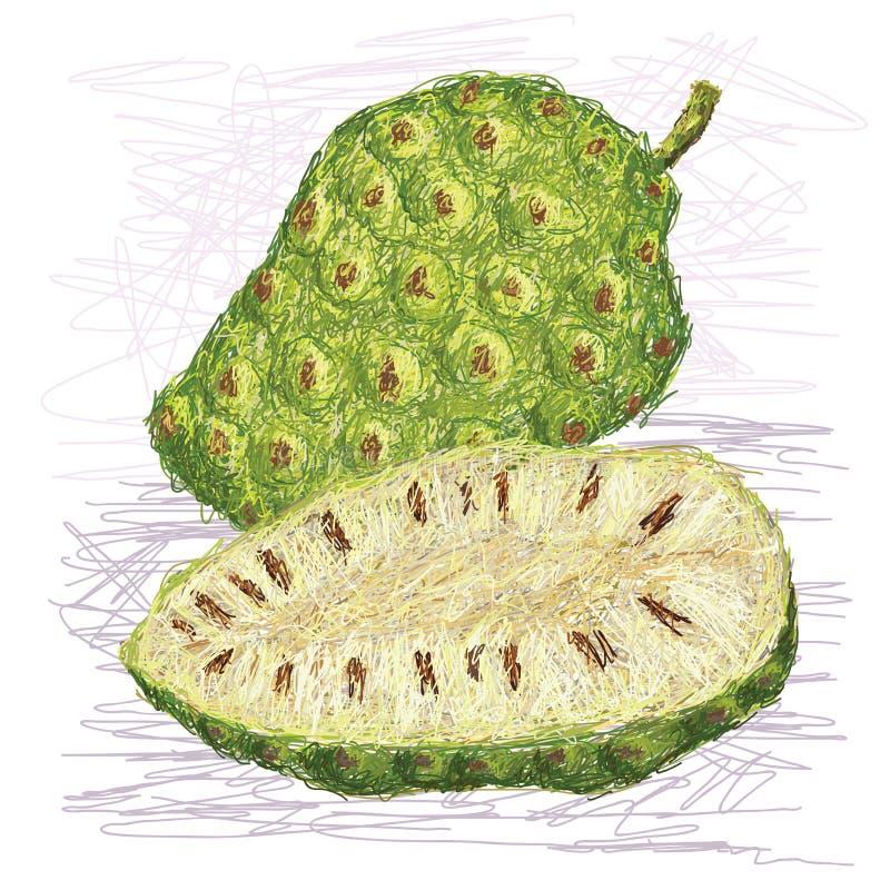 Secção transversal do fruto de Noni ilustração stock