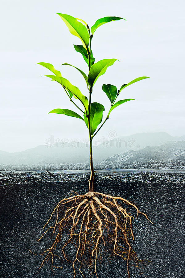 Secção transversal do solo com uma planta verde foto de stock