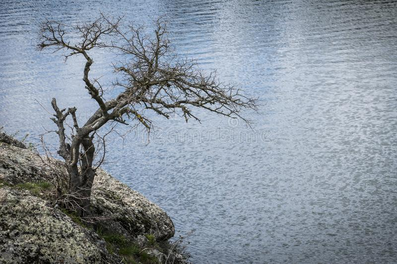 Sec isolé peu d'arbre sur une berge rocheuse images libres de droits