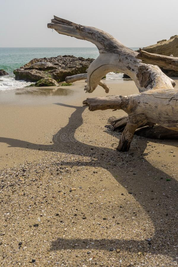 Sec tree on a savage beach near Varna.  stock photography