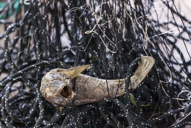 Sec vers le haut des poissons en filet de pêche image stock