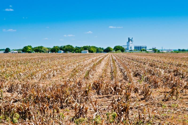 Seca na exploração agrícola fotografia de stock royalty free