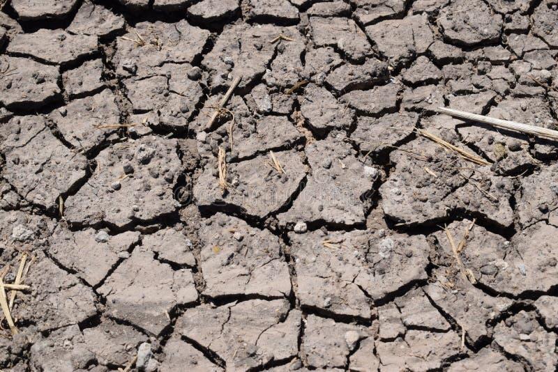 A seca, a terra rachou devido à seca, grama seca na terra fotos de stock