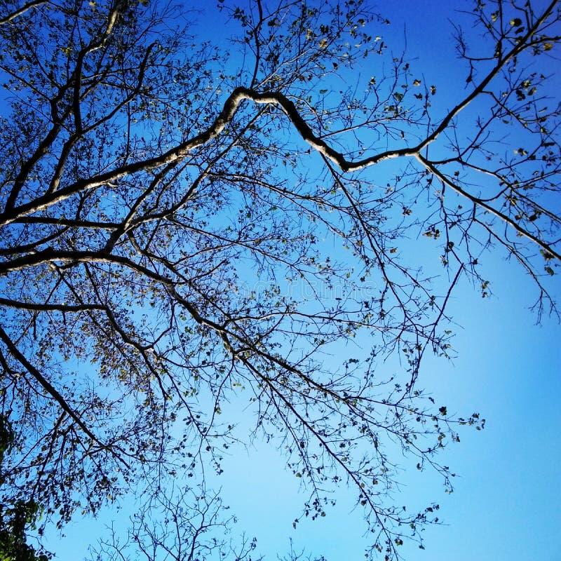 Secado com céu azul fotografia de stock royalty free