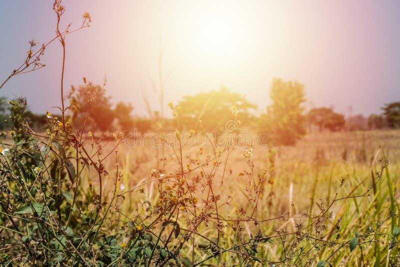 Secado deja la hierba y el sol brillante imagen de archivo