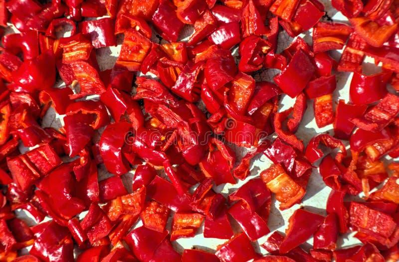Secado del fondo tajado de la pimienta roja imagen de archivo libre de regalías
