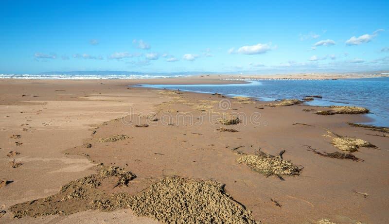Secado del quelpo y de la hierba del mar en el estuario del río de Santa Maria en Rancho Guadalupe Sand Dunes en California centr fotos de archivo libres de regalías