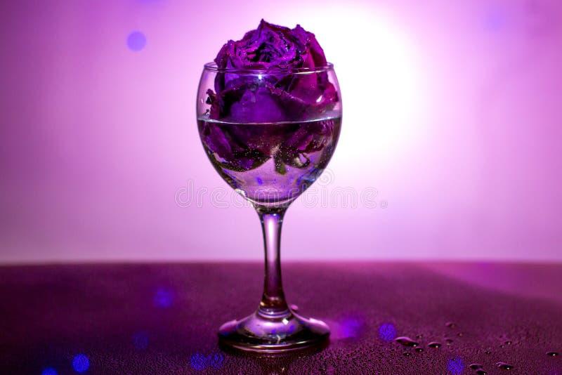 Secado subió en una copa de vino fotos de archivo libres de regalías