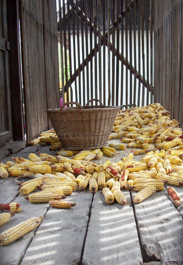 Secador viejo del maíz imágenes de archivo libres de regalías