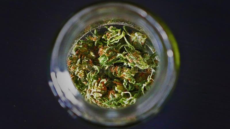 Secagem da marijuana da jaritataca em um frasco de cura fotos de stock