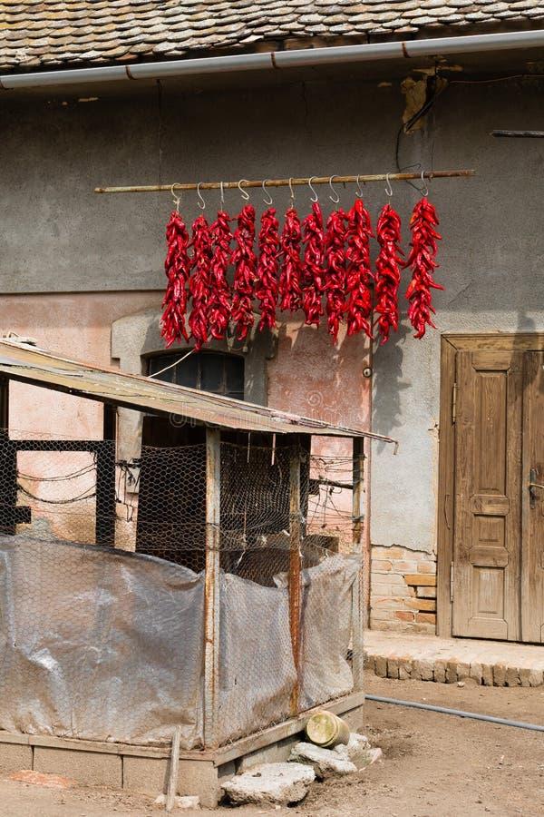 Secagem de suspensão das pimentas vermelhas imagens de stock