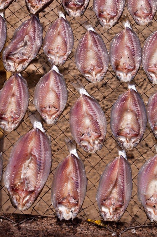Secagem dos peixes no sol foto de stock royalty free