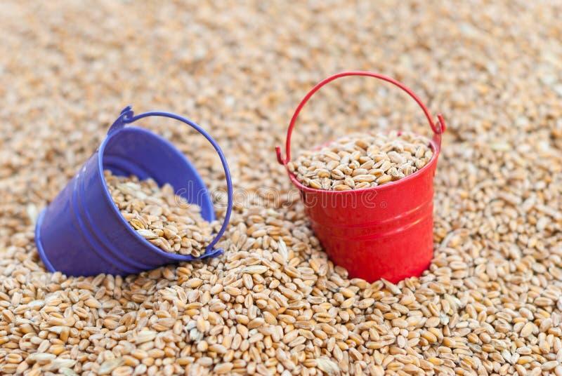 Secchi colorati di grano fotografia stock libera da diritti