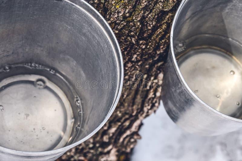 Secchi con la linfa dell'acero raccolta dagli alberi immagine stock libera da diritti