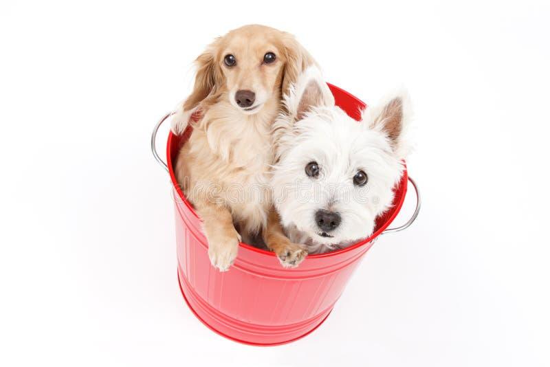 Secchio e cani immagini stock