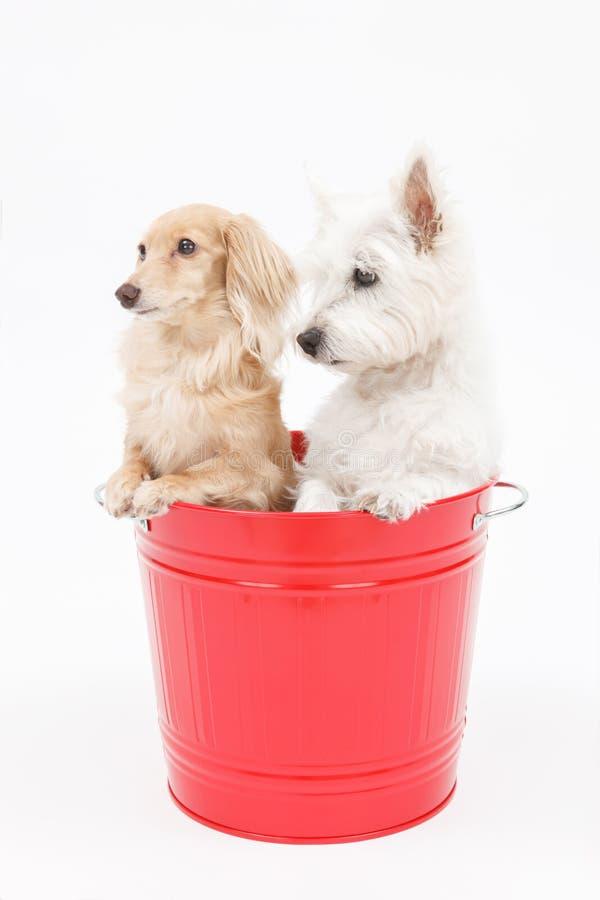 Secchio e cani fotografia stock libera da diritti